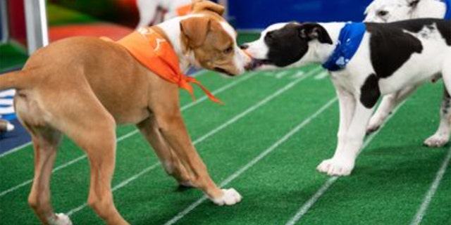 Before the big game, the 17th Annual Puppy Bowl will be broadcast on