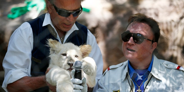 Siegfried Fischbacher, left, holds up a white lion cub as Roy Horn holds up a microphone during an event to welcome three white lion cubs to Siegfried & Roy's Secret Garden and Dolphin Habitat, in Las Vegas.
