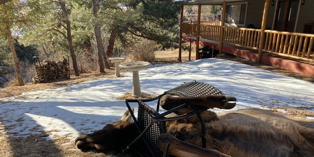 """""""Thanks to the local resident in Idledale who reported this cow elk with a lawn chair stuck around its neck and front legs, wildlife officer Joe Nicholson was able to help her out,"""" tweeted Colorado Parks and Wildlife."""