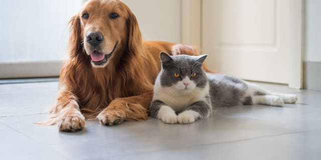 "The West Coast is reportedly ""cat country"" while the East Coast is ""dog country,"" according to Porch.com. (iStock)"