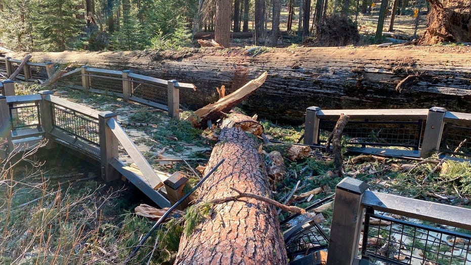 Yosemite National Park temporarily closed after windstorm hits California
