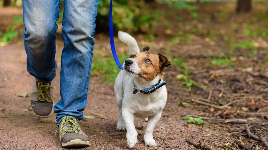 Donna canadese sorpresa a camminare con il marito al guinzaglio come un cane mentre infrange il coprifuoco del coronavirus
