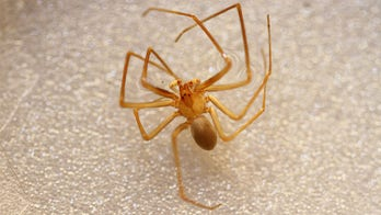 Venomous spiders found at University of Michigan library prompt two-day shutdown