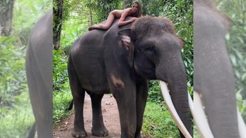 Instagram influencer who posed nude with endangered elephant responds to critics: 'I love and respect animals'