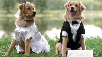 Animal shelter hosts dog wedding in South Carolina for charitable cause
