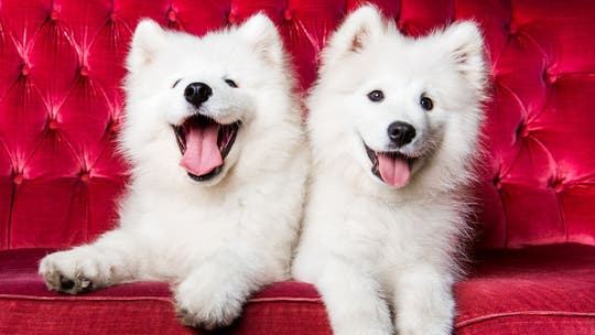 These are the 'cutest' dog breeds based on 'golden ratio' beauty measuring theory