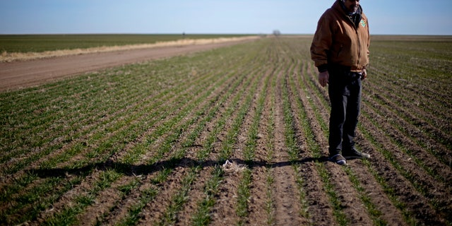 In this Jan. 13, 2021 file photo, Rod Bradshaw stands in a field of wheat on his farm near Jetmore, Kan. (AP Photo/Charlie Riedel File)