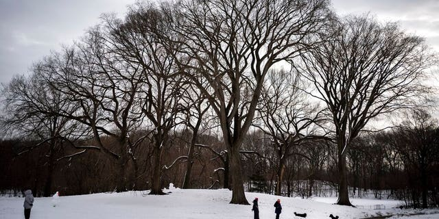 People walk their dogs in the snow-covered Long Meadow in Prospect Park, Tuesday, Feb. 9, 2021, in the Brooklyn borough of New York. (AP Photo/Wong Maye-E)