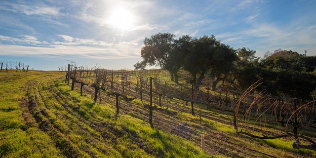 Santa Maria Valley, known for its vineyards and wineries, is giving $100 to visitors who spend at least two nights there. (iStock)