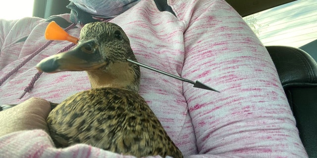"""""""The dart actually entered just below her eye, so had it been a few millimeters back she would have lost her eye,"""" said?Dr. Karlee Hondo-Rust of Treasure Valley Veterinary Hospital."""