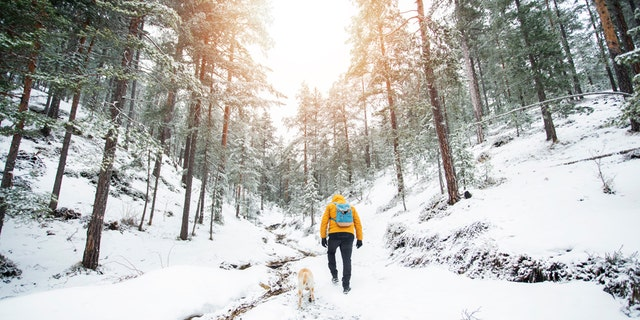 A dog named Ash was recognized for staying with his owner in foothills of the Julian Alps for seven nights in freezing temperatures while his owner had a broken ankle. (iStock)