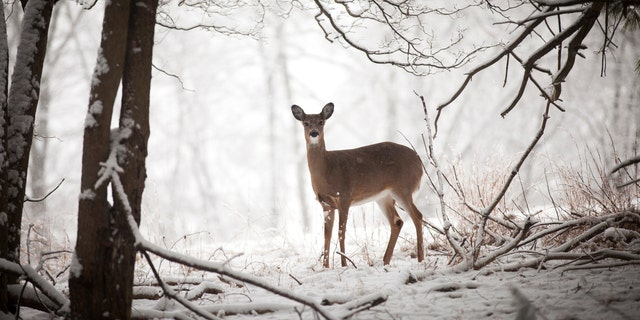 The New York DEC announced Wednesday that it is adding one week to the late bow and muzzleloader hunting seasons, starting Dec. 26, 2021 through Jan. 1, 2022. (iStock)