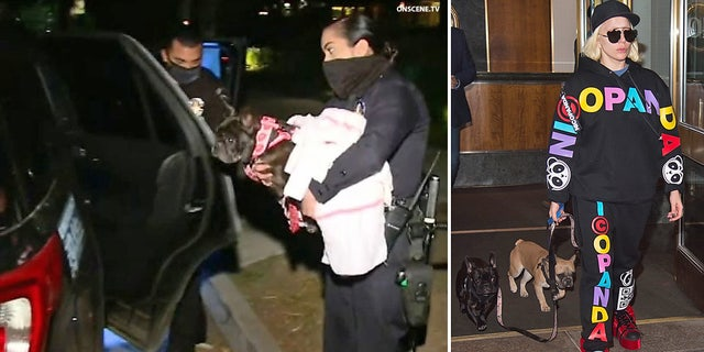 Lady Gaga (R) with her two dogs, Koji and Gustav, and one of the dogs being returned by police (L).