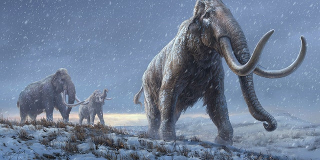 An illustration of the steppe mammoth.