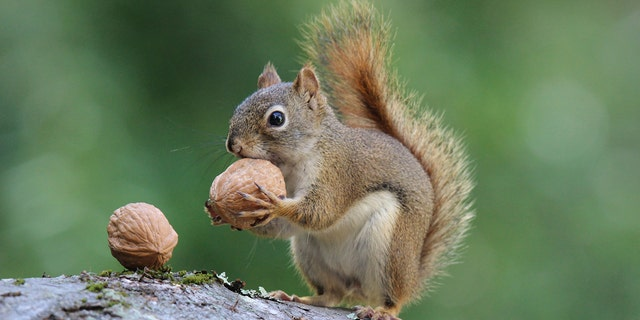 Two men from Williamsport, Penn., have been cited for hunting under the influence of a controlled substance after they got caught stalking squirrelswhile under the influence ofmarijuana.