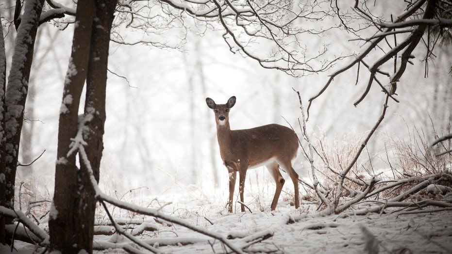 New York extends hunting season by 1 week for 'Holiday Deer Hunt'