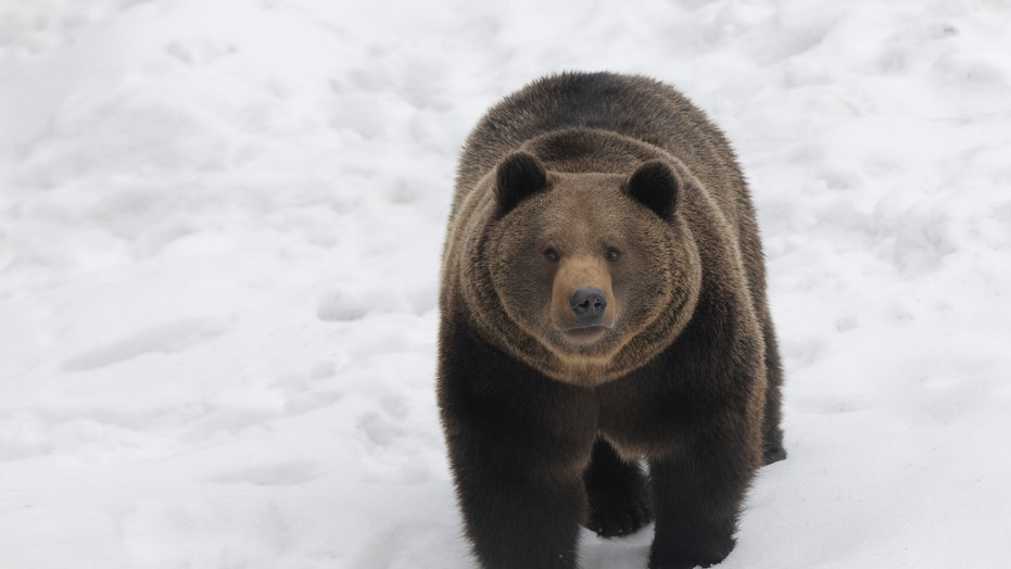 Bear chases skier down mountain in Romania: 'Don't look back!'