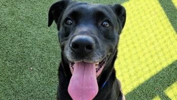 Tampa rescue dog had bullet in its abdomen