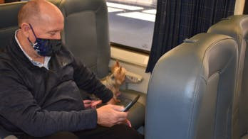 Amtrak adds new options to bring pets on trains