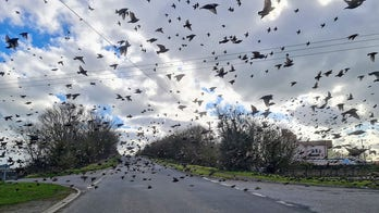 Flock of birds surrounds car in breathtaking photo