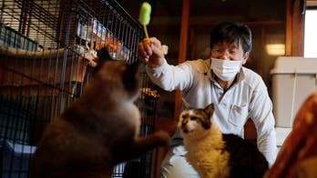 Japanese man in Fukushima rescues cats, other animals abandoned in nuclear zone