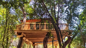 Homeowner told to take down popular treehouse Airbnb because it's not on his property