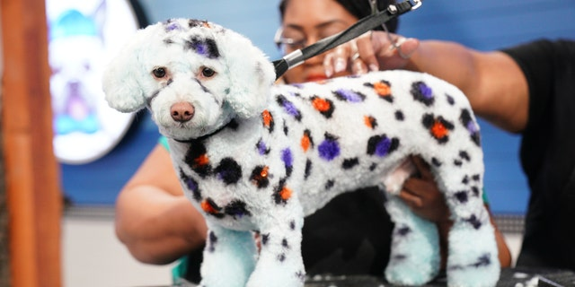 Rebel Wilson-hosted dog grooming competition series showcases the best creative groomers in the country.