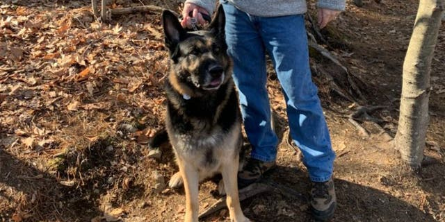 """Walsh and others are praising the dog as a """"hero"""" for ensuring the man got help."""