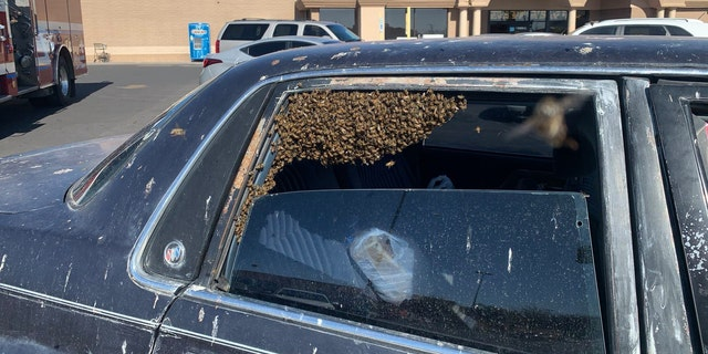 A man's car was overrun by bees while he was grocery shopping earlier this week.