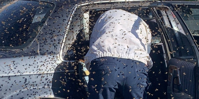 According to the fire department, there were about 15,000 bees in the car.