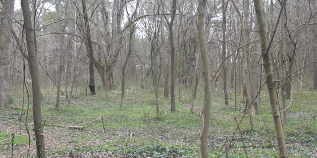 The Browns Mill food forest land. (Source/FNC Jayla Whitfield)