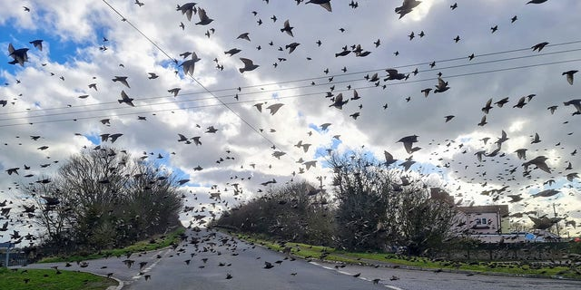 Jamie Kingscott, a wildlife relief coordinator for the Secret World Wildlife Rescue, was on his way to work when he took the picture.