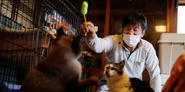Sakae Kato reportedly takes care of cats diagnosed with feline leukemia at his Fukushima home, which is located in Namie, a restricted zone. (Reuters)
