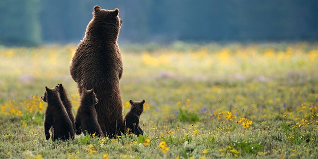 Photographer Kunal Singh snapped the picture in Grand Teton National Park in Wyoming.