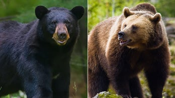 SFGate makes convoluted correction to story on home-invading bear: 'A bear that is brown, not a brown bear'