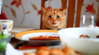 Fancy Feast releases cookbook for humans inspired by new cat food line
