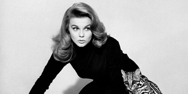 Swedish-American actress Ann-Margret poses with an ocelot in a promotional still for 'Kitten With A Whip', directed by Douglas Heyes, 1964.