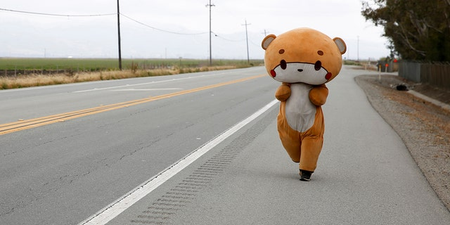 Jesse Larios, 33, from Los Angeles, wears a bear suit while walking along Hollister Road in Gilroy, Calif. on April 21.