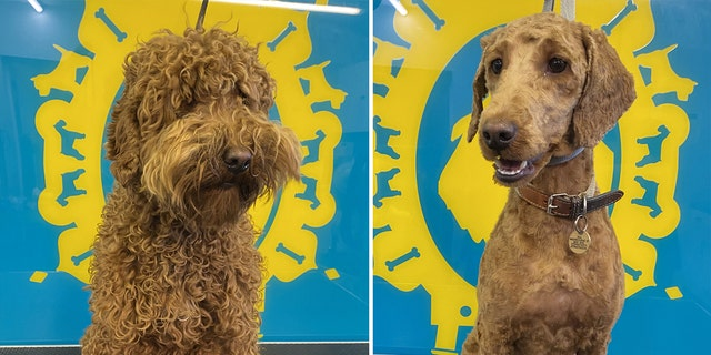 """""""Our customers and their dogs love coming to the salon, and we love to see them, so the lockdown once again has been really hard for everyone,""""Bone Idol owner Scott Learmouth said."""