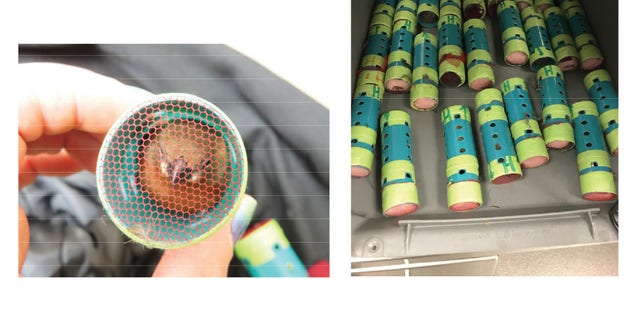 Man busted at JFK with 35 live finches stuffed inside hair curlers1
