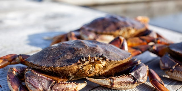 From there, Liu refused to cooperate with the DFO, declining to provide paperwork required to show source of the crabs on site and answer questions.