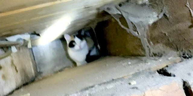Glyn Stafford reportedly heard a meowing coming from one of the walls near the kitchen ceiling.