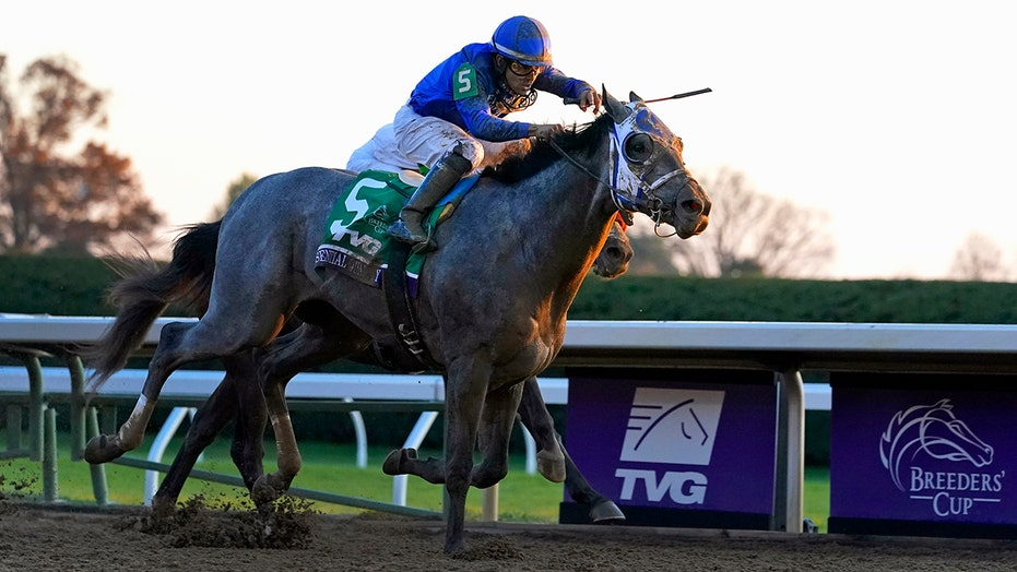 Shades of gray rare among Kentucky Derby favorites, winners