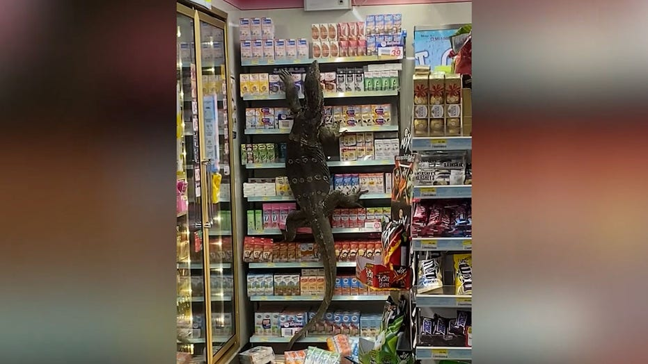 Giant lizard sneaks into 7-Eleven, sends customers into hiding