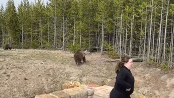 Illinois woman who ventured too close to grizzly bear at Yellowstone is cited: report