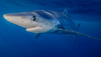 How to reduce the risk of a shark attack