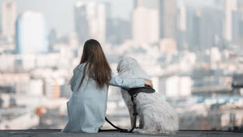 15 dog-friendly cities that are getting more popular, survey says