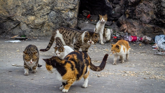1,000 feral cats released onto Chicago streets to combat rat problem