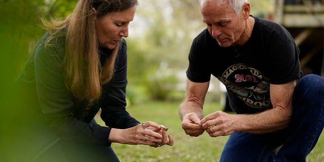 حشره شناسان دانشگاه مریلند ، مایکل روپ و پائولا شروزبری ، یک بیل خاک را برای استخراج پوره ها از سیکادا در حیاط حومه شهر کلمبیا ، میشیگان ، سه شنبه 13 آوریل 2021 الک می کنند (عکس AP / کارولین کاستر)