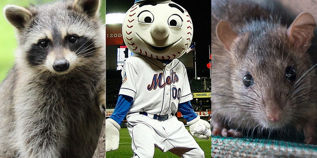 Raccoon or mouse? Maybe Mr. Mette knows.
